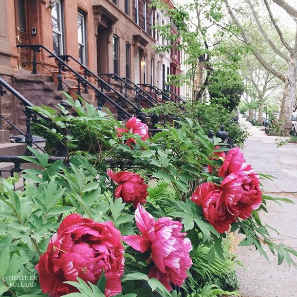 Heather Bullard | NYC2015-2
