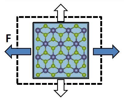 Unusual Negative Poisson's Ratio in 1T-Type Crystalline 2D Transition Metal Dichalcogenides
