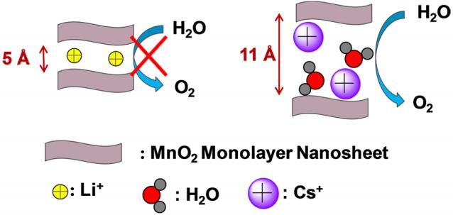 Effect of Interlayer Spacing on the Activity of Layered ManganeseOxide Bilayer Catalysts for the Oxygen Evolution Reaction
