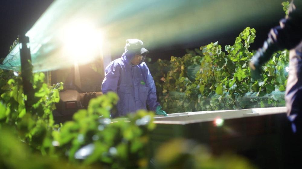 Night-Harvest-Wide-2.jpg
