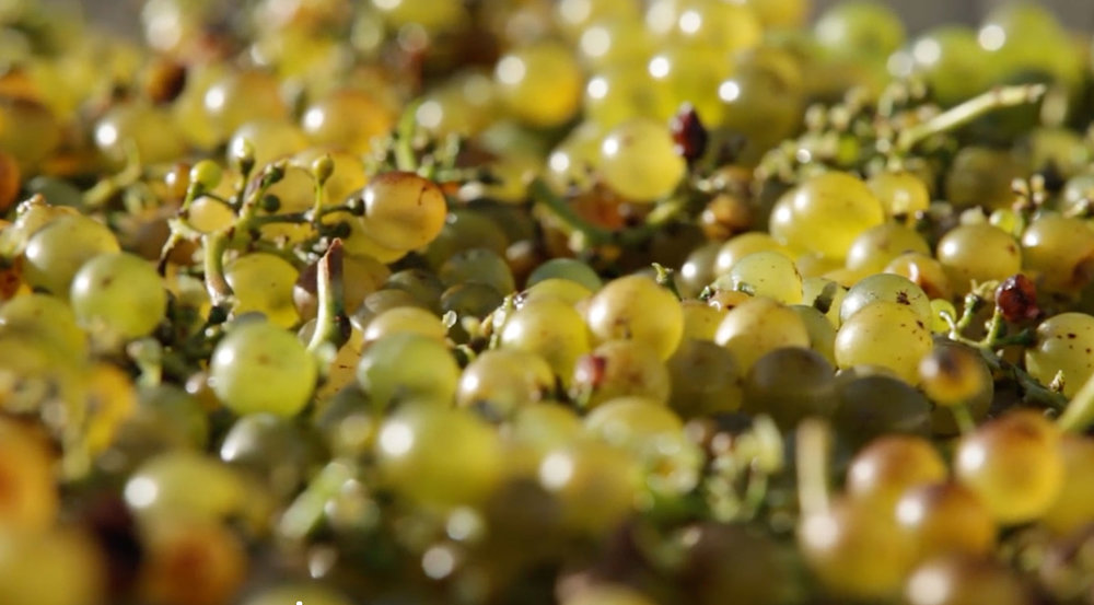 Green-Grapes-CU.jpg