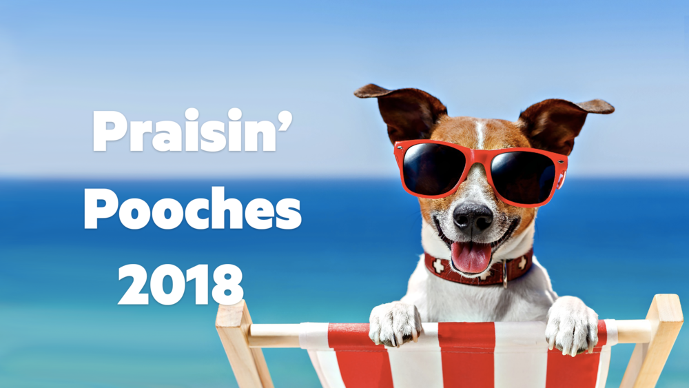 Praisin' Pooches 2018 - On October 6, 2018, we had a great time at our inaugural Praisin' Pooches with over 70 pooches and even more humans! Thanks to all who came out, including the Mayor of Clearwater, George Cretekos, Clearwater Police K-9 unit, and Clearwater Fire K-9 unit! We were blessed to bless the pooches!