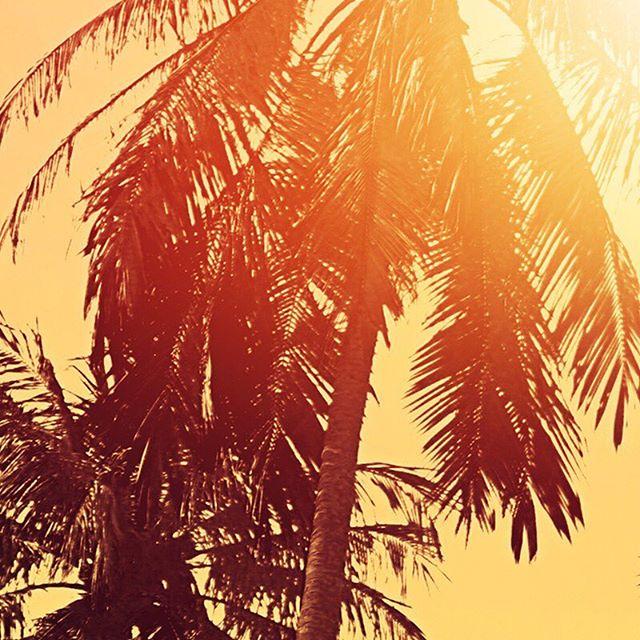 Our avocados love sunshine & waves. #CaliGoldAvos 🥑🏖