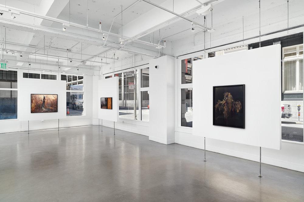 Christine Elfman: Even Amaranth , installation view, Gallery Wendi Norris, San Francisco, CA, July 14 — September 3, 2016, photography: John Janca