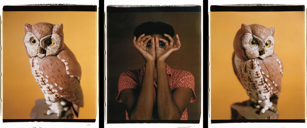 María Magdalena Campos-Pons,  Nesting II,  2000, Polaroid Polacolor Pro, 24 x 20 photograph, 24 x 72 inches (61 x 152.4 cm)