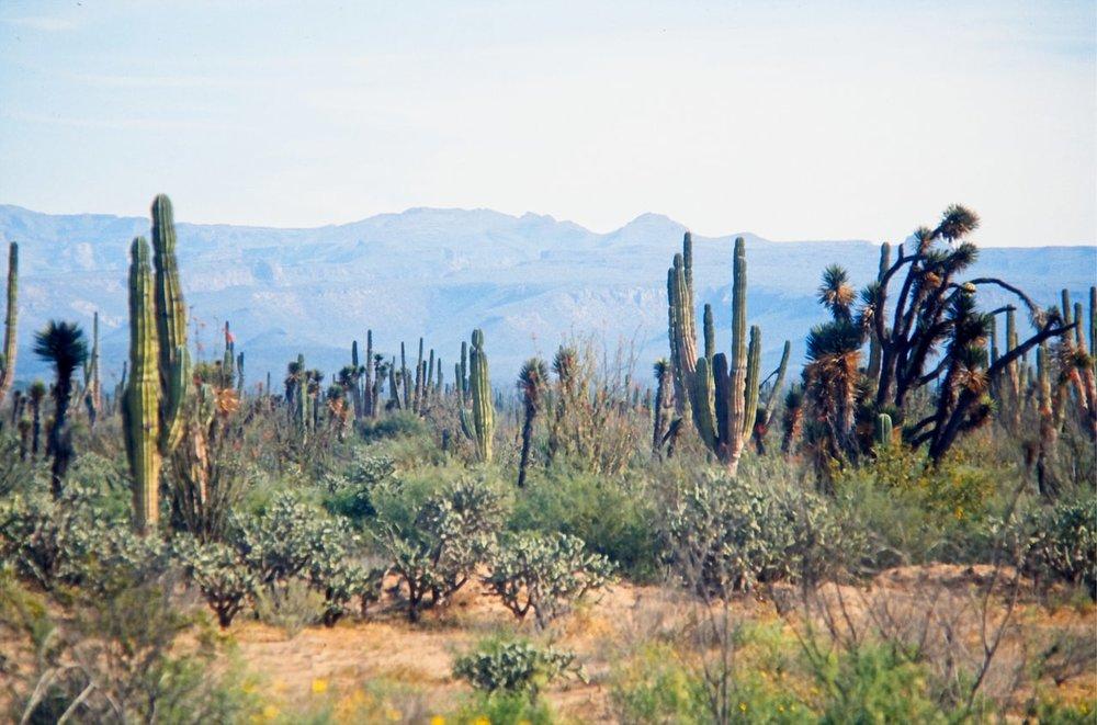 Baja California CREDIT: GETTY