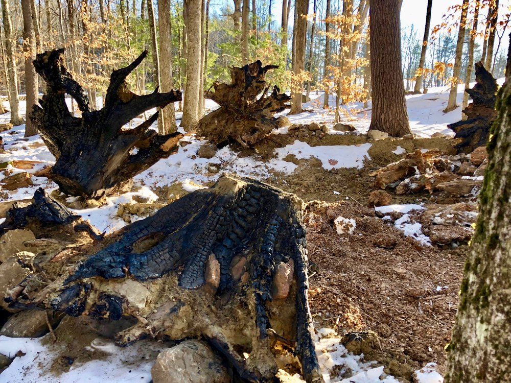 THE STUMPERY, Dan Snow, 20 fire-sculpted tree stumps, features for a woodland fern and moss garden environment, Harrisville, NH, 2018.