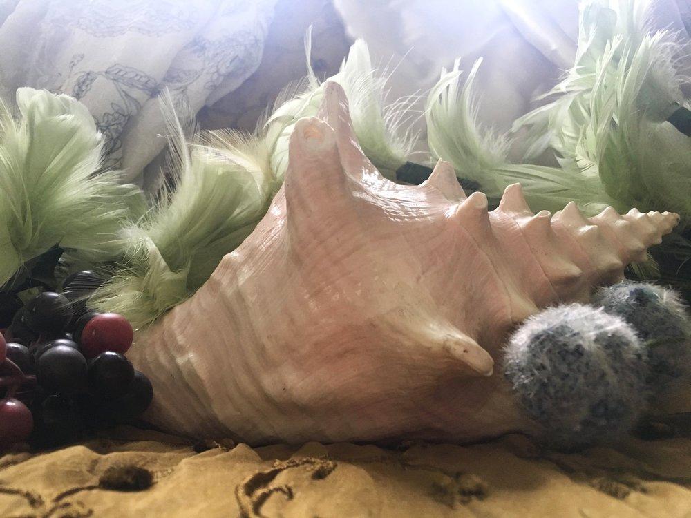 conch-soft