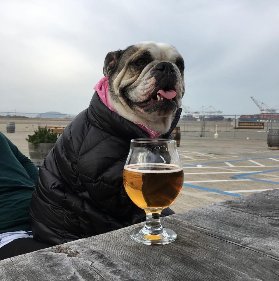 Check out Dogs of Faction Brewing on Instagram!