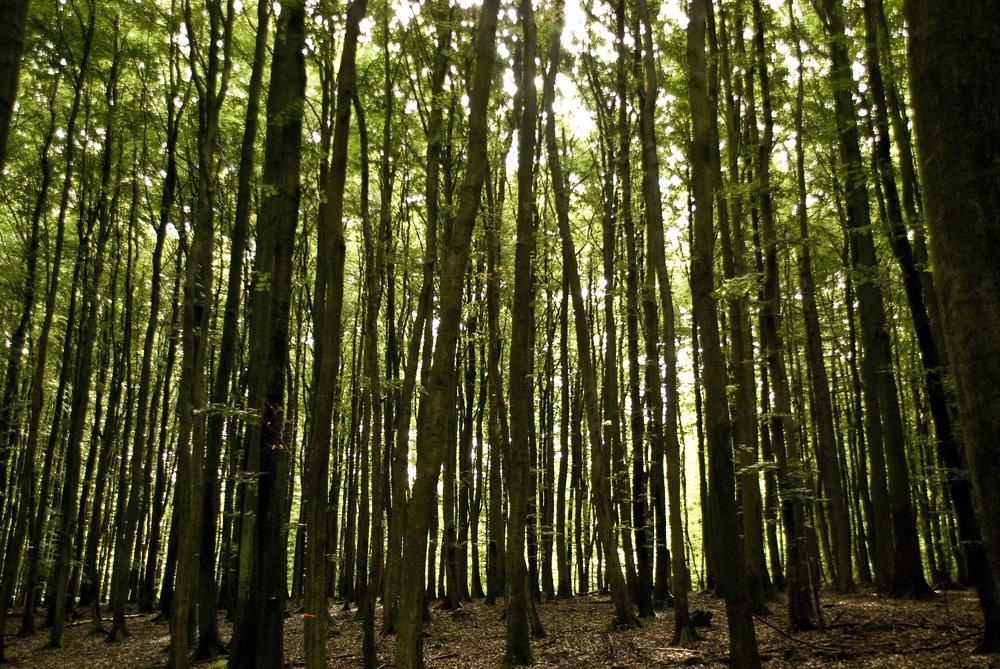 forest_zylOcBcd.jpg