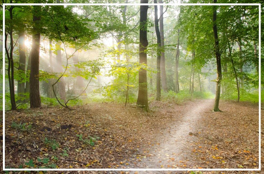 dry-leaves-forest-leaves-41102.jpg