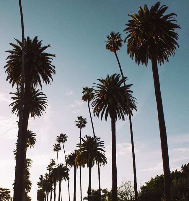 can someone invent mini palm trees or smthing so I can start a collection of palm trees thx
