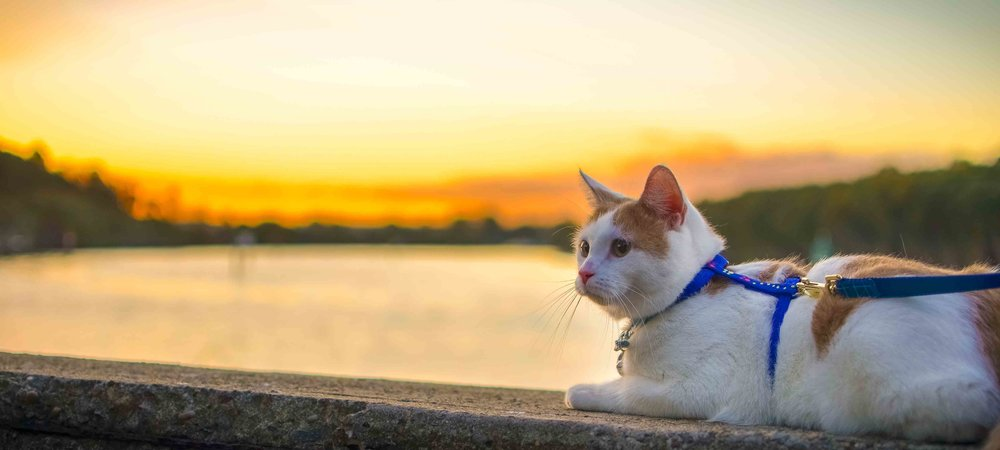 Exploring with your cat - Find out how