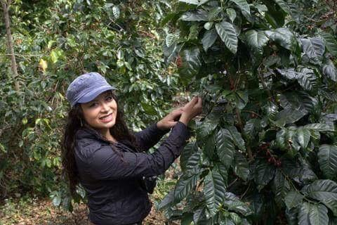 Maritza Taylor, licensed Q-Grader and Director of Quality Control at Birdrock Coffee (San Diego, CA) and PTs Coffee (Kansas City, MO)