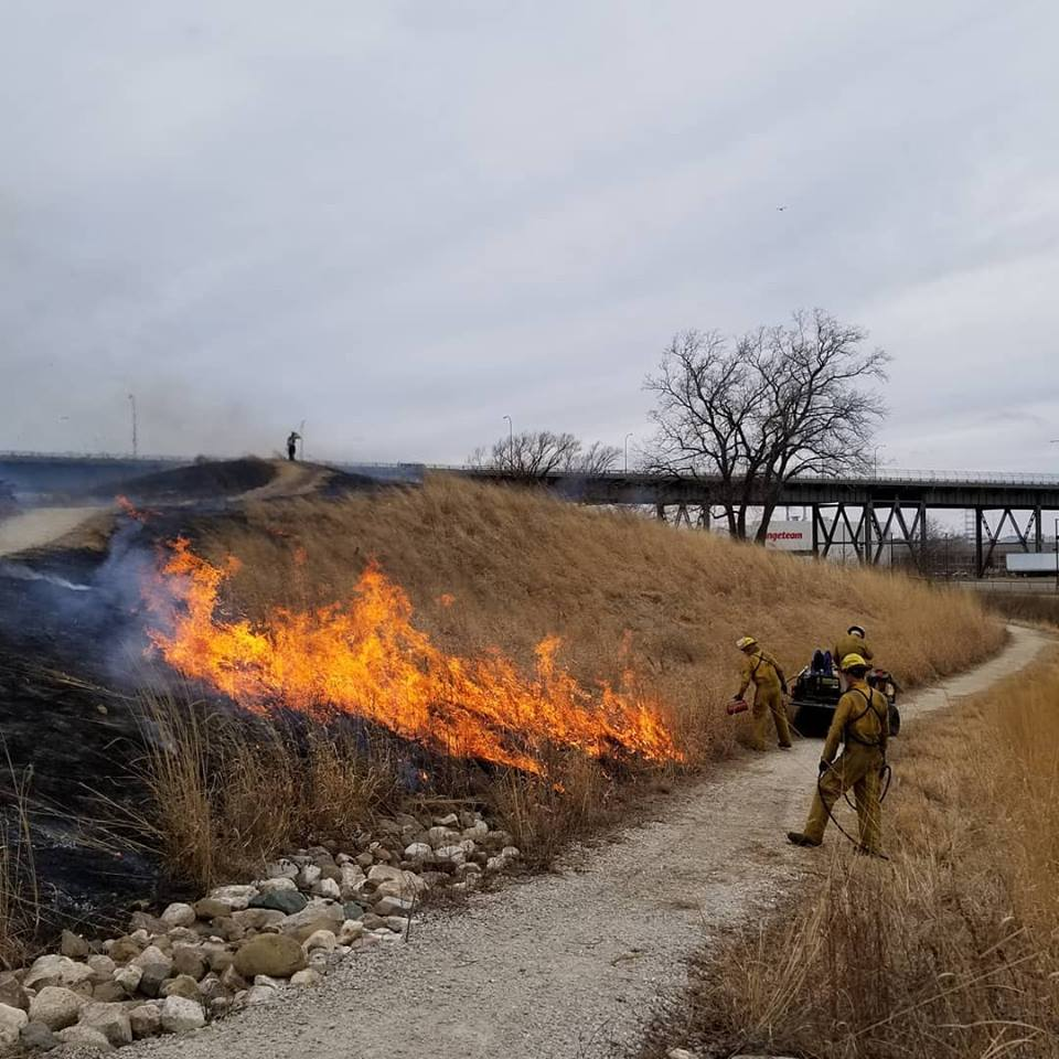 Wildlife & Native Vegetation : The first prescribed burn in Three Bridges Park occurred in 2018 and is an important tool in managing native habitats. (Photo: Jeff Veglahn)