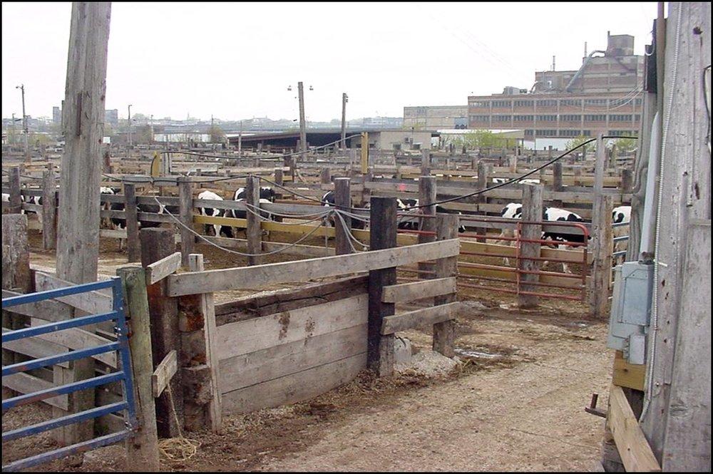 stockyards.jpg