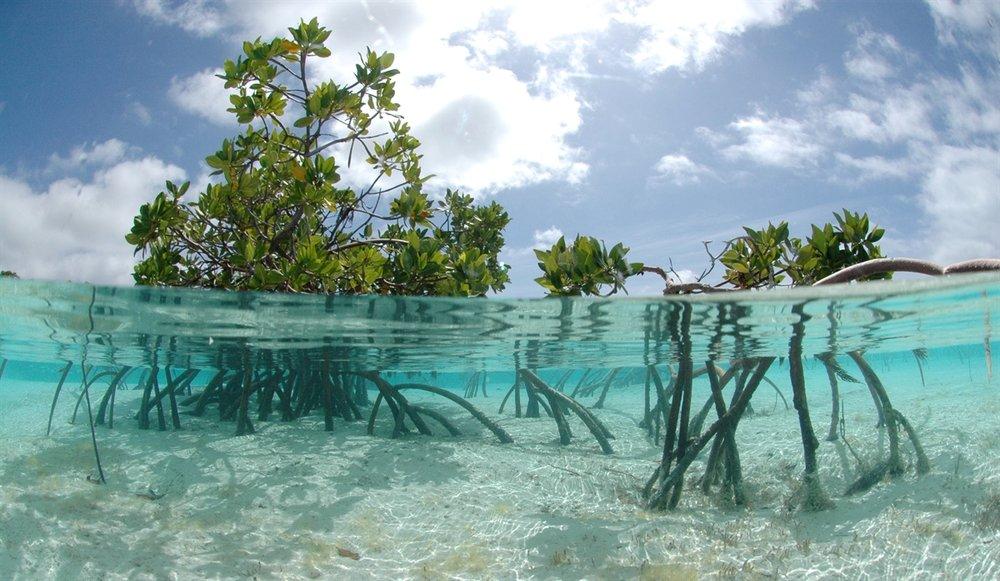 Mangroves dome les.jpeg