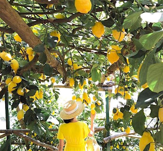 Lemons of Campania.jpg