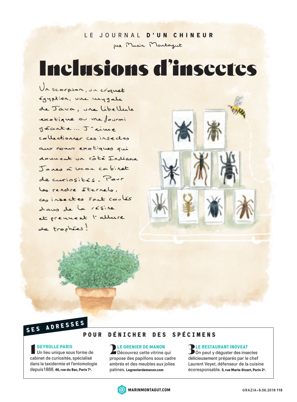 0450_08_06_Inclusions insectes.png