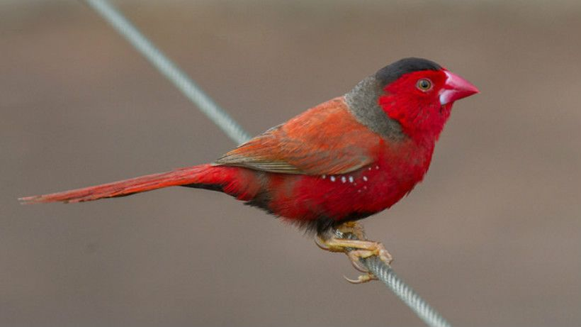 W Finch Leatherhead 17 Amazing Auss...