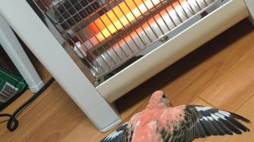 Keeping birds warm in Winter — Queenslander Aviaries