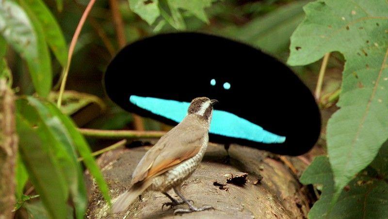 weirdbird_4.jpg