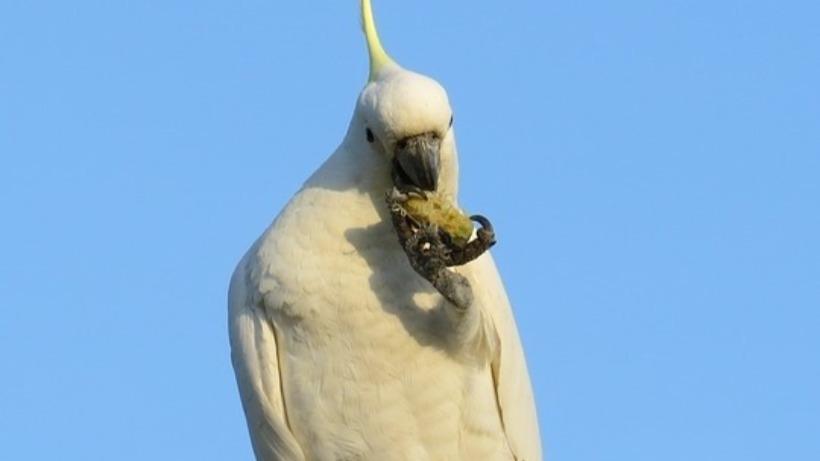 Safe Nuts & Seeds for birds -
