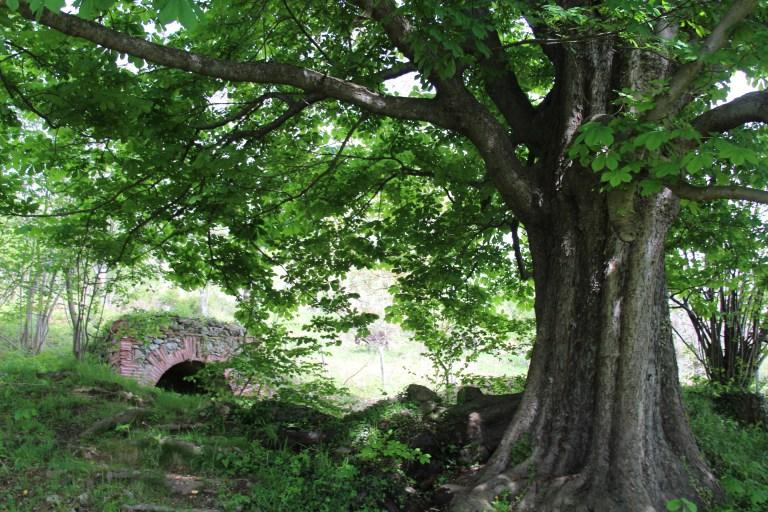 sourceandtree.jpg