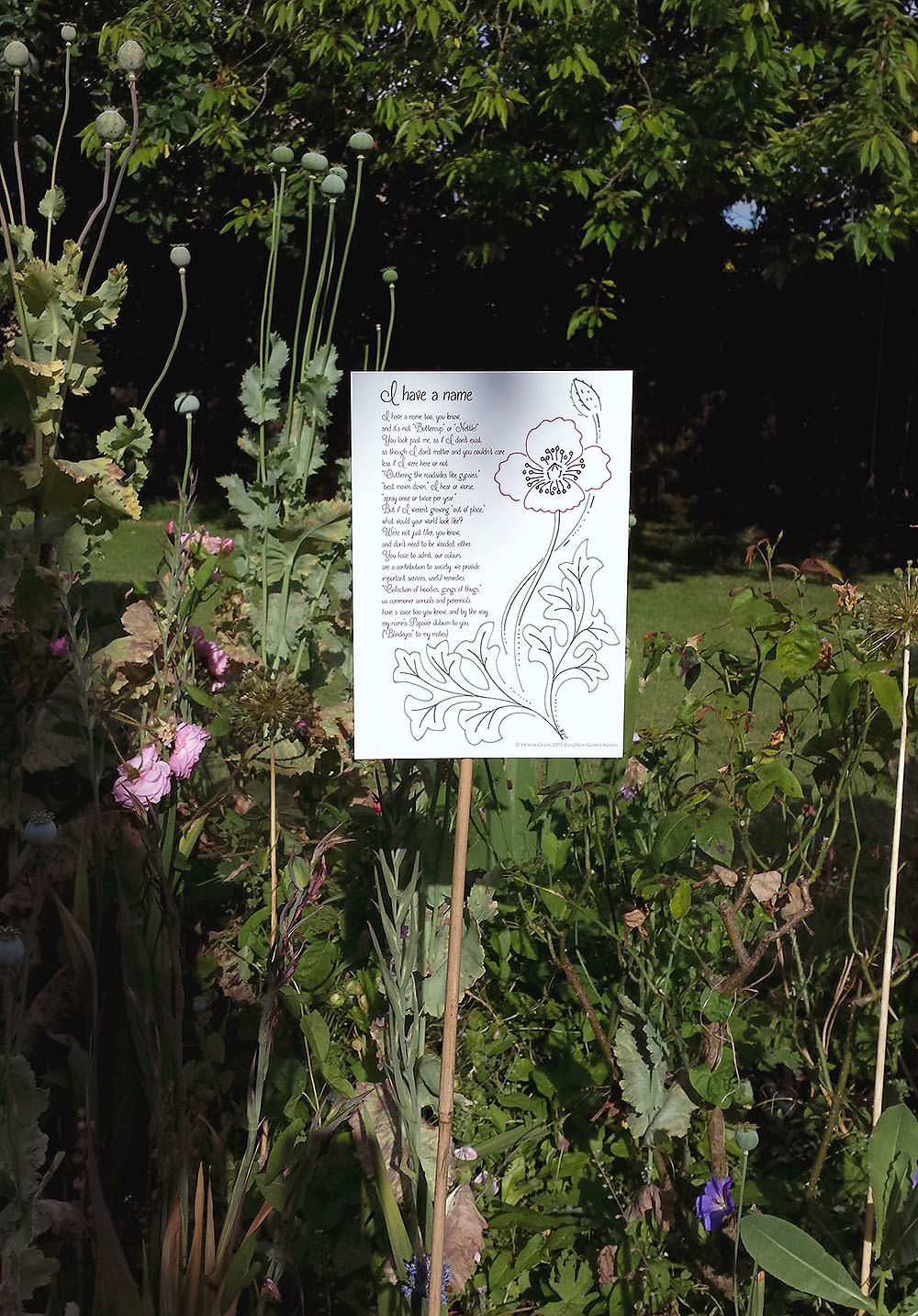 In situ at Coughton Court Gardens