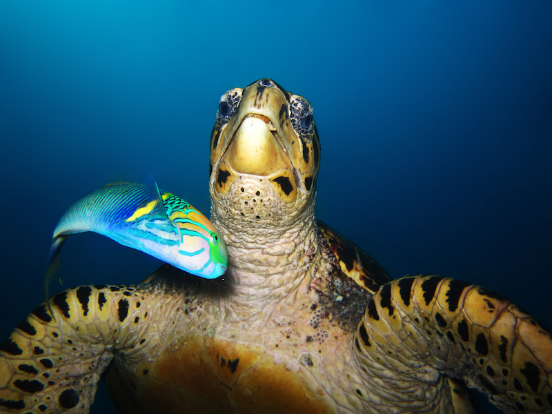 Diving-Coral-Divers-Sodwana-Bay-Underwater-8.jpg