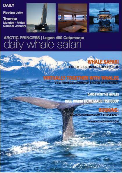 whale Safari Arctic Princess