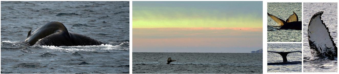 Magical whales | Arctic Princess
