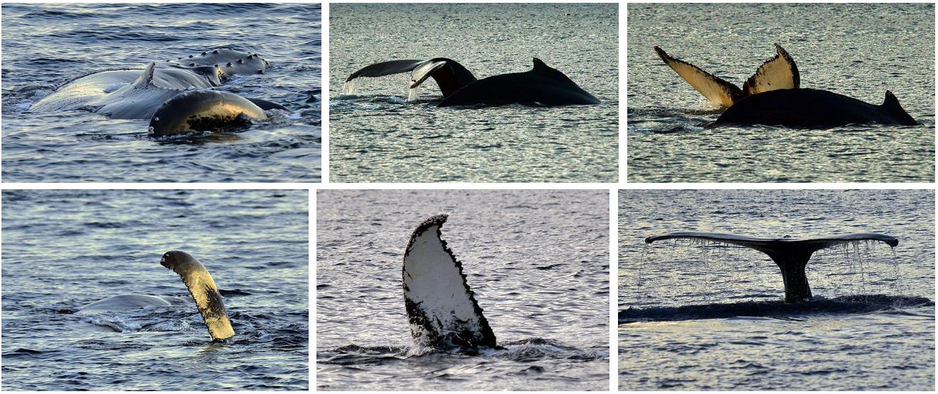 Whale watching Arctic Princess|Whalesafsari Tromsø