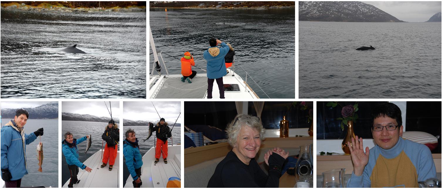 Whalesafari and Fishing at Arctic Princess