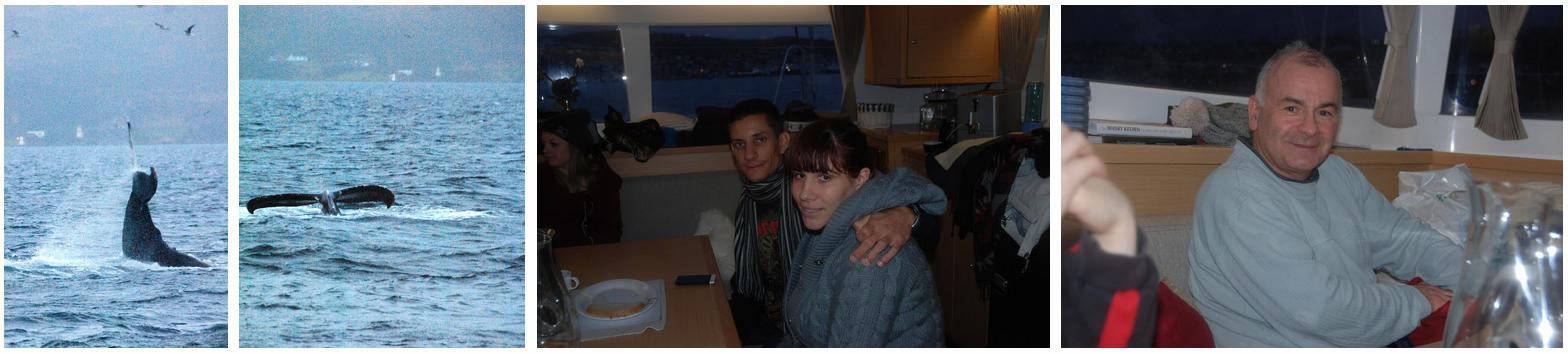 Whalesafari at Arctic Princess nov 21 1