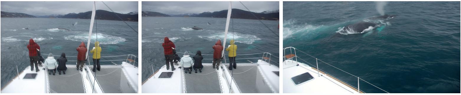 Whalesafari at Arctic Princess nov 21 3