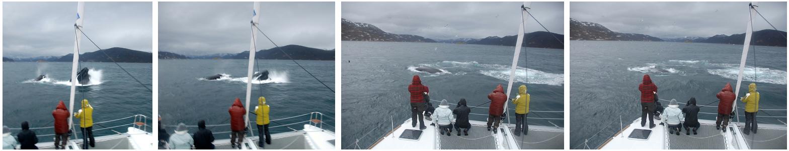 Whalesafari at Arctic Princess nov 21 4