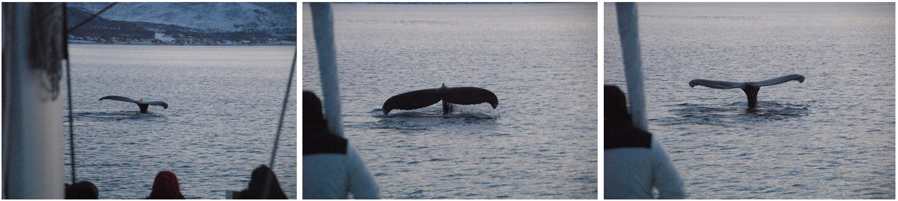 whalesafari Ciustomer from MalaysiaI