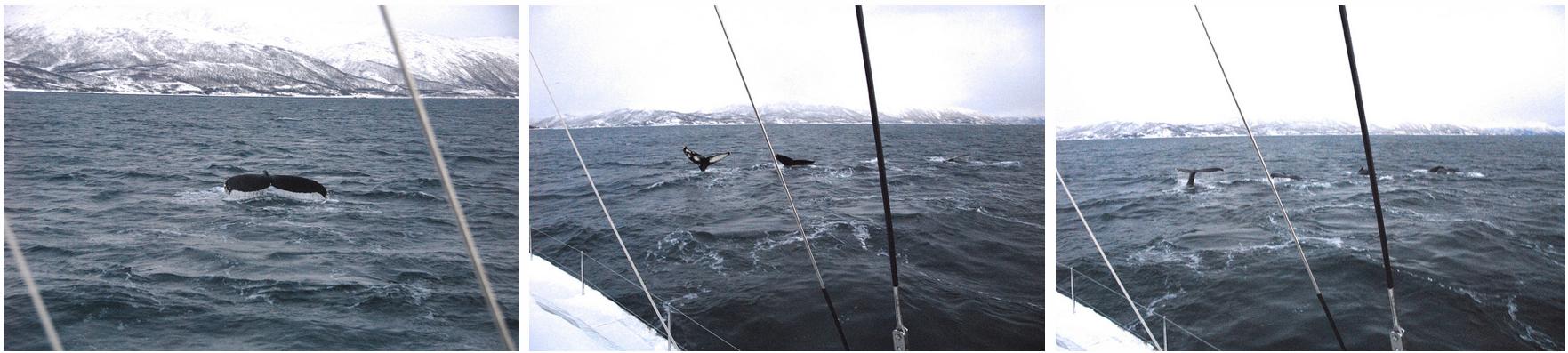 Whalesafari Tromsø Arctic Princess