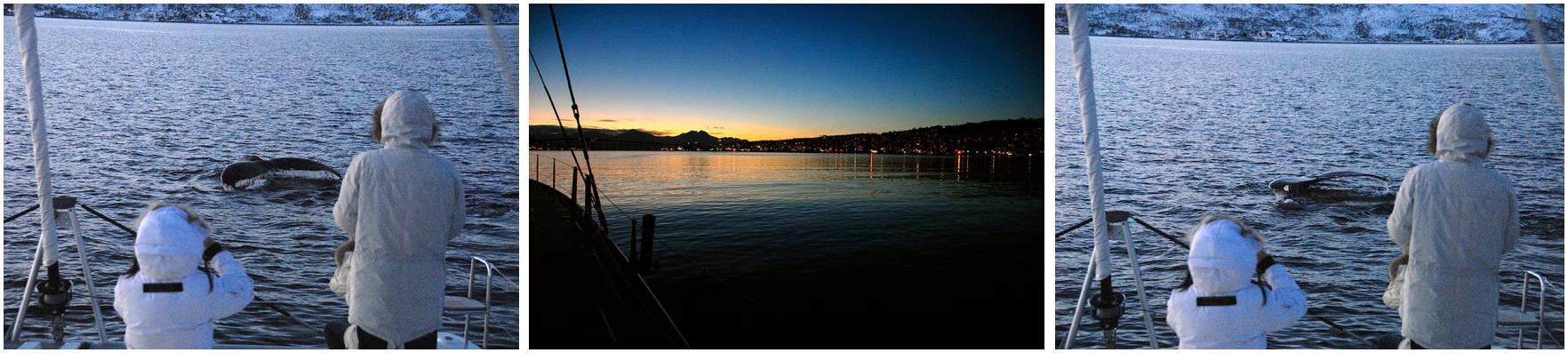 Whalesafari Tromsø | Nice Day | Arctic Princess Des 17