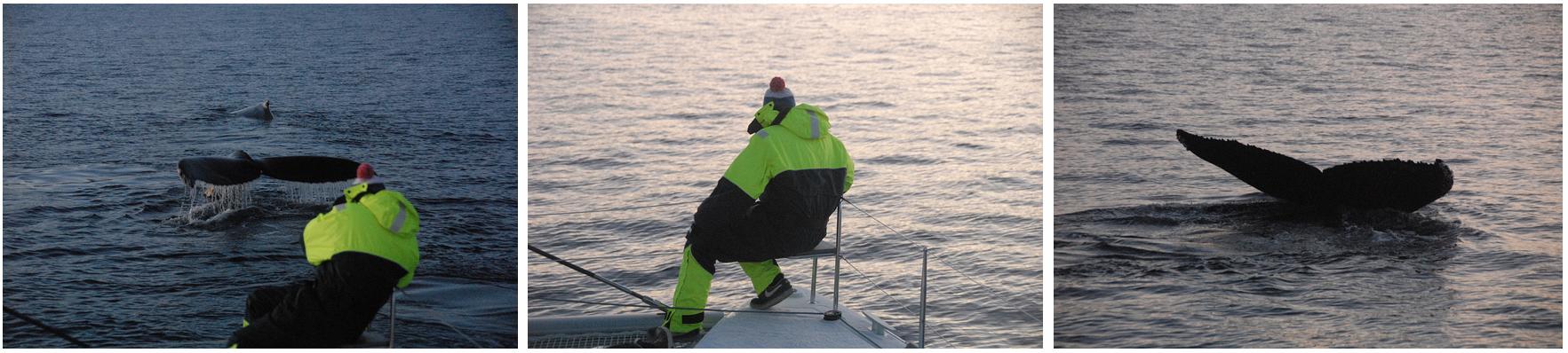 Whalesafari Whalewatching Tromsø Arctic Princess
