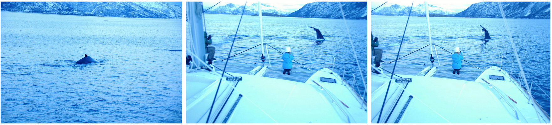 #Whale #Watching and #Fishing #Tromsø