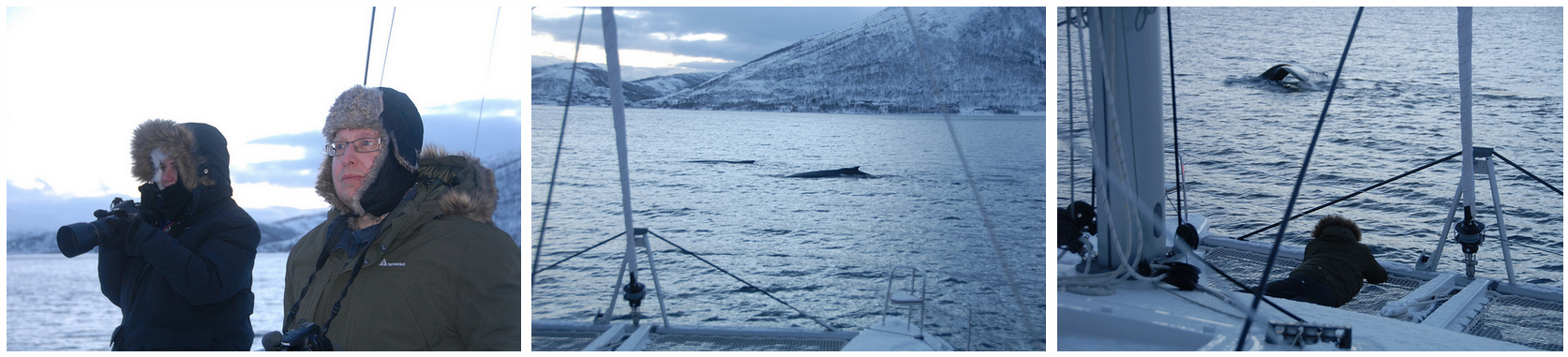 Whale watching | Tromsø January 18