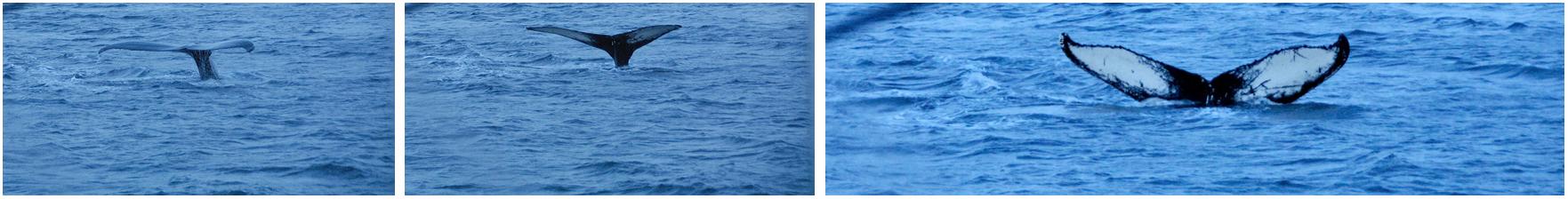 #Whalewatching #Whalesafari #Tromsø