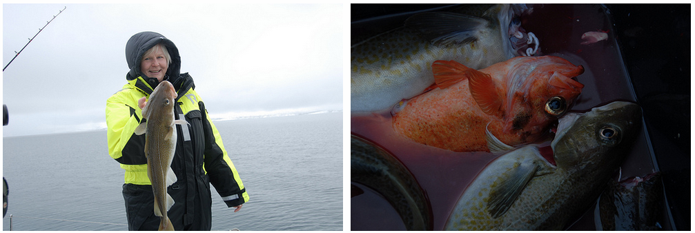 #Fishing | #Tromso | guests Germany