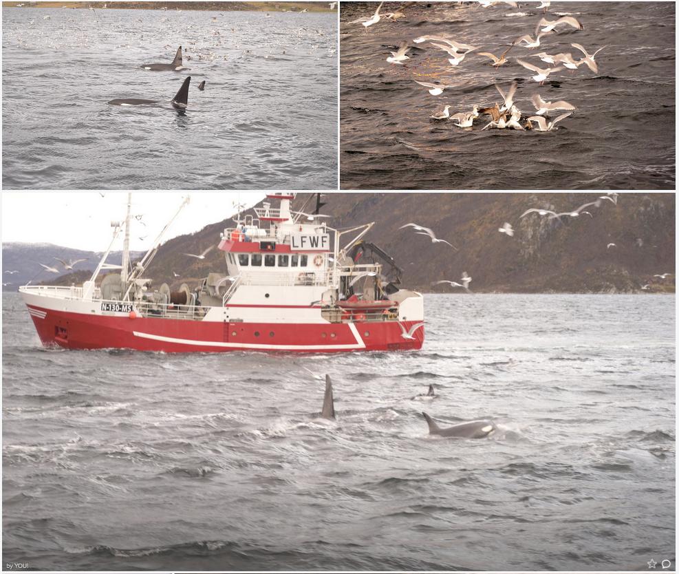 Happy #Whalesafari guests | #Tromso | ArcticPrincess