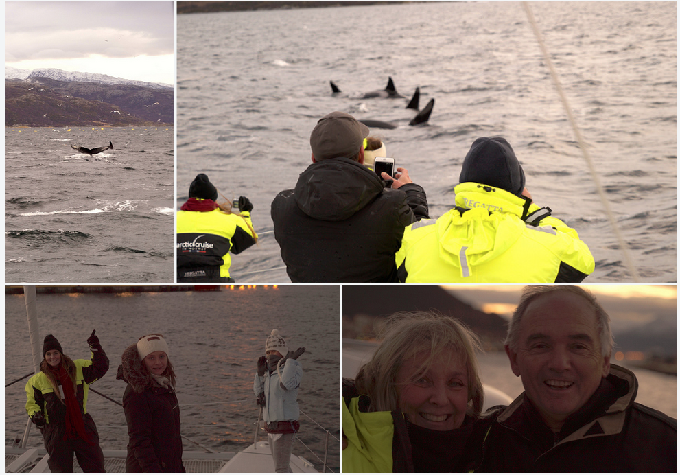 #Orcas |#Whale | Action | #Tromso | Arctic Princess