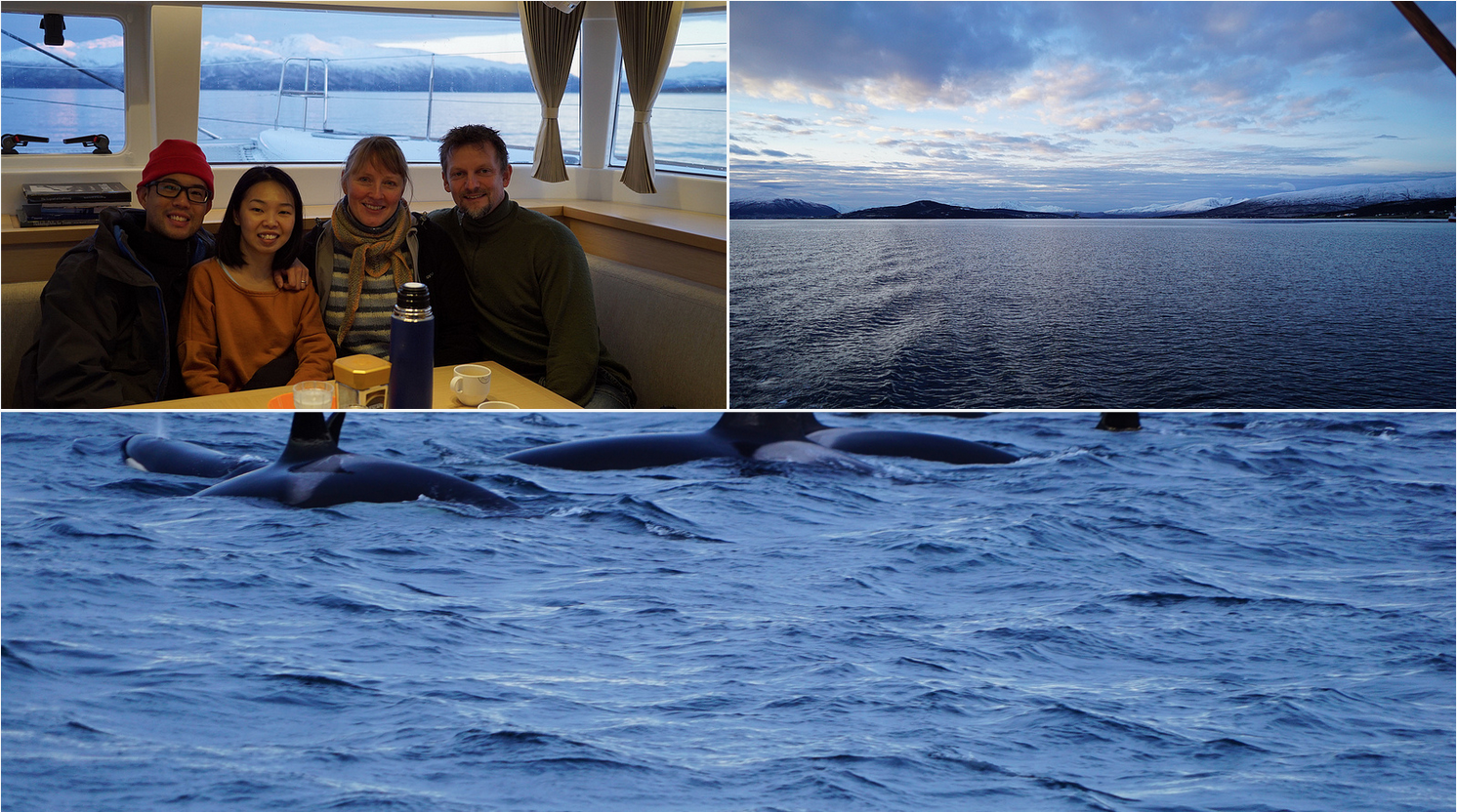 Whalesafari with Artctic Princess | Tromso