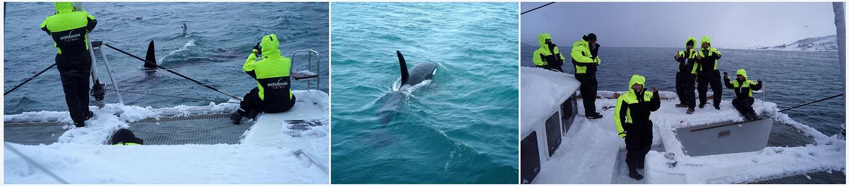 Killerwhale | #safari | #Tromso |Arctic Princess