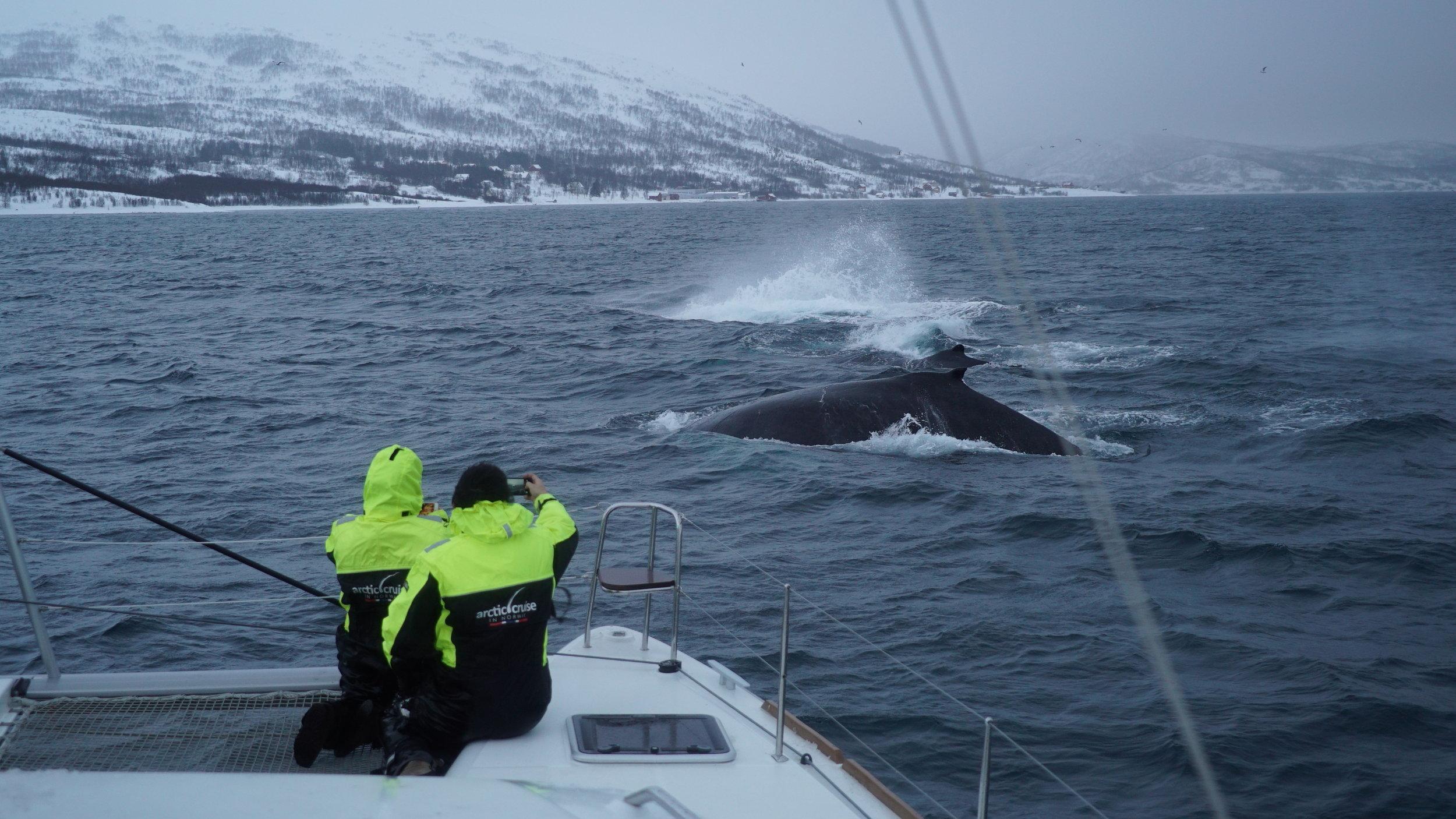 Whalesafari |#Tromsø | Boat